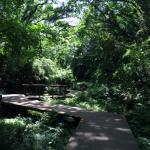 三浦京急三崎口小網代の森にアクセス。ここは現代に残された神奈川の秘境
