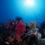 赤珊瑚のネックレスの値段はメチャ高かった!現在のグラム価格と密猟は?