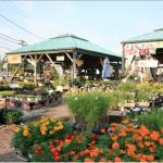 ペットエコで人気の園芸店ヨネヤマプランテーション!癒しの空間作りで都会の中にオアシスを!