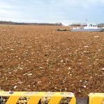 銚子港がゴミまみれに!台風18号の鬼怒川決壊被害は漁業に影響も