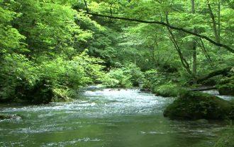 native-stream1
