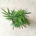 ダイソーの観葉植物に生えた白カビ対策。初心者向けの予防法について