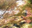 2016紅葉見ごろの高尾山、服装と駐車場に気を付けないとヤバイです!