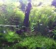 アクアリウム初心者が水草水槽のレイアウトの基本を学ぶ簡単な方法は?