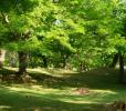 NHKあさイチ!で放送された奈良公園の名物・鹿せんべいに見る自然史