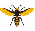 スズメバチの巣の値段と材料 どこに作り始める?雨の駆除は